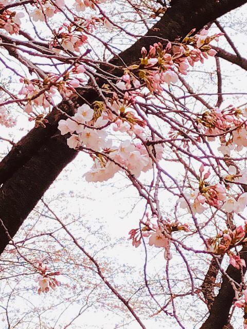 20190324_sakuraphoto_03_3.jpg