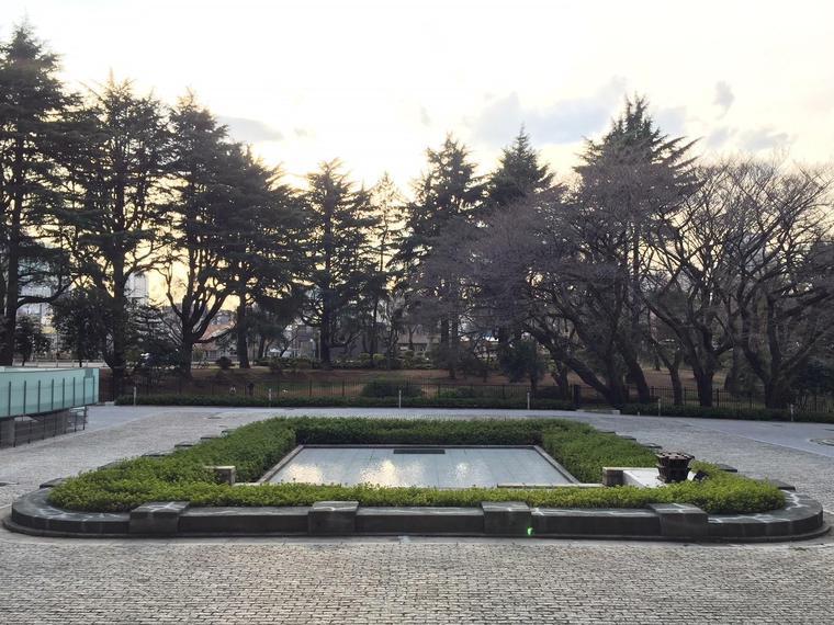 桜の木 (3).jpg